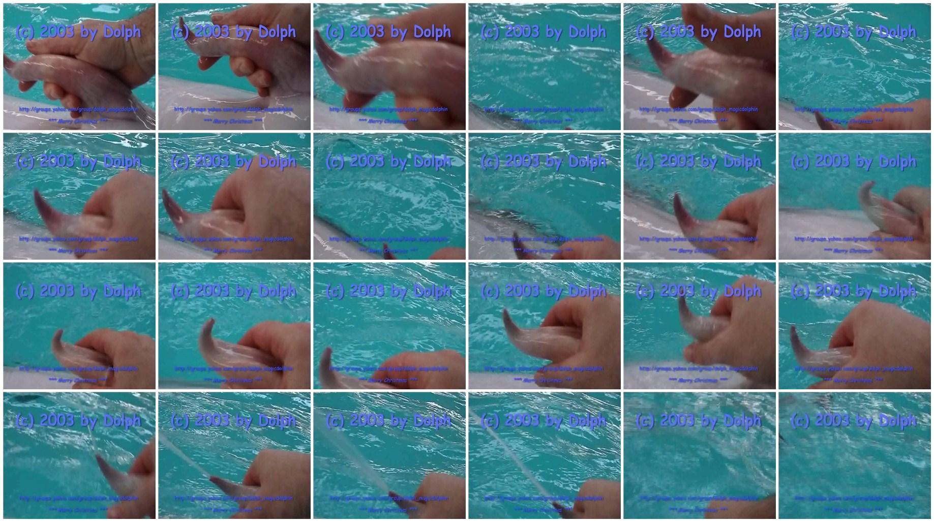 Секс з дельфінами 13 фотография