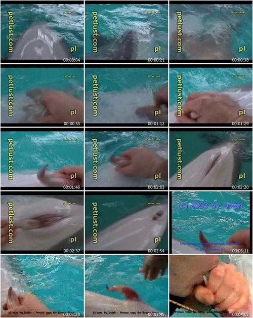 Dolphin Blowjob 35